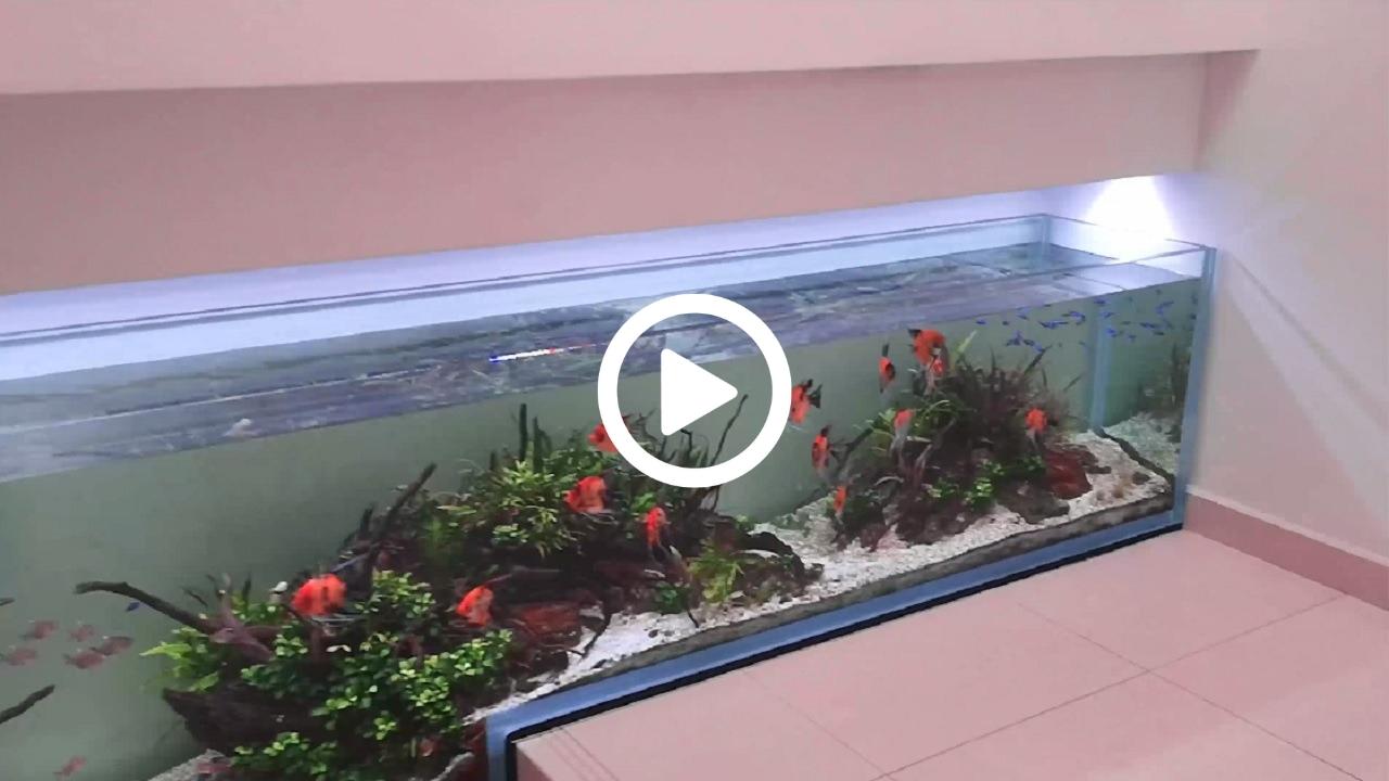 E.R. Lux - Nuovo Acquario in Sede -