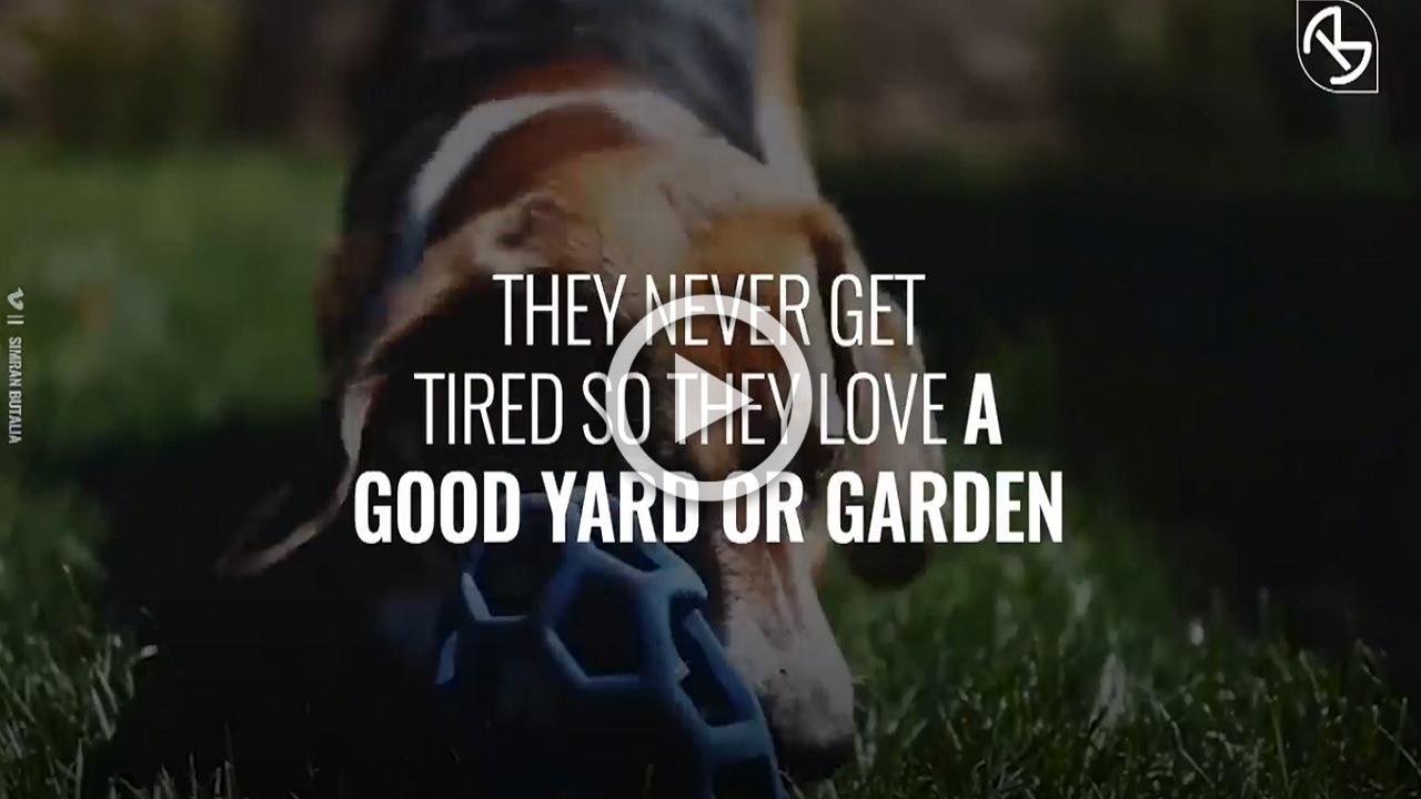 Questi sono i migliori cani per una famiglia